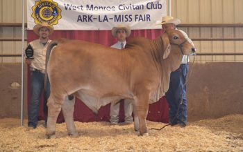 Skeeter Wins Grand Champion At 2013 Ark-La-Miss Fair