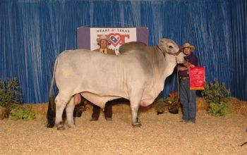 Winning At The 2013 Heart Of Texas Fair