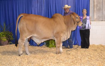 Skeeter Takes Reserve Grand At 2013 Tennessee State Fair