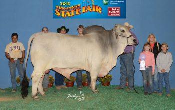 Winning At The 2013 Arkansas State Fair
