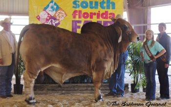 KF-CCC Skeeter Wins Grand At South Florida Fair