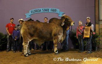KF-CCC Skeeter Wins Reserve Grand at Florida State Fair