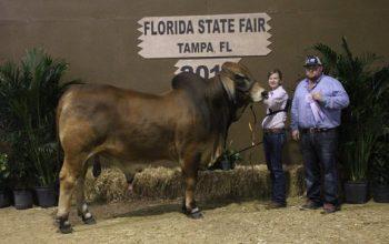 2016 Florida State Fair Championship