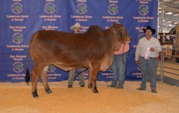 2016 Rio Grande Valley Livestock Show Win