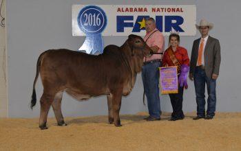 Grand Champion Win at the 2016 Alabama National Fair!
