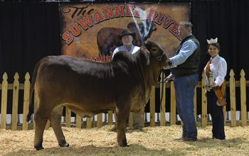 Sierra Nova Takes Grand at Suwannee!