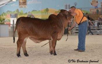KF MS SIERRA NOVA 35 Winner at Miami Dade County Fair