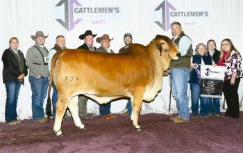 2021 Cattlemen's Congress Grand & Senior Champion