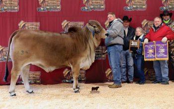 2021 Dixie National Livestock Show Grand & Senior Champion